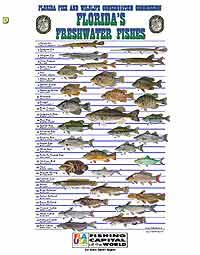 Becks Lake Fish Camp And Wildlife Refuge Pensacola And Northwest Florida Area S Best Freshwater Boating Fishing Camping Destination